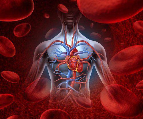 6 Лікарських трав для очищення крові