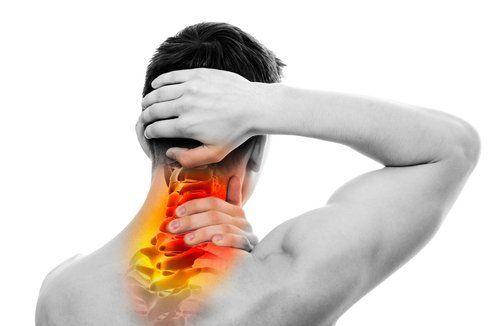 Хребет і його зв`язок з іншими органами