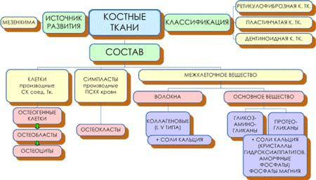 структура тканин